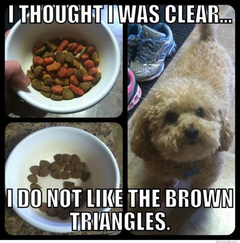 Silly Dog Meme - 25 funny dog memes weknowmemes