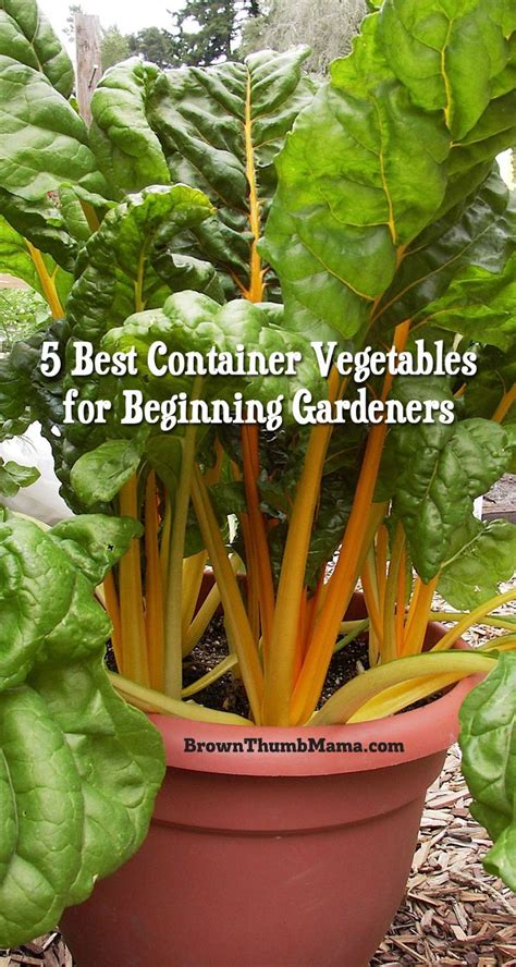 container vegetable gardening tips 25 best ideas about container gardening on