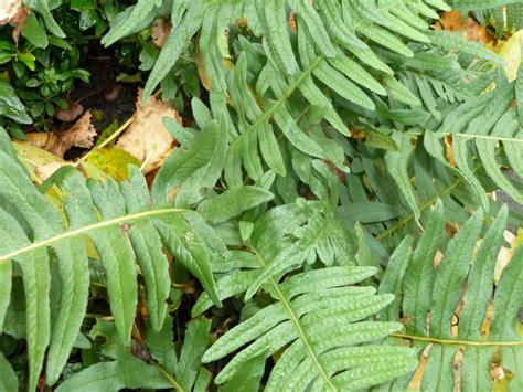 beukenblad goed in de tuin in m 205 jn tuin zwarte gaten