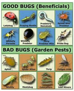 the the bad the gardening tips