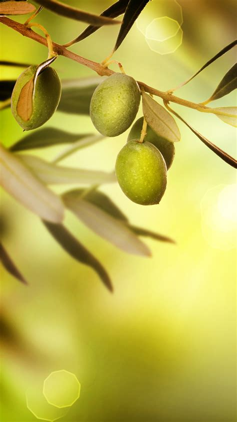 olive tree wallpaper phone olive wallpaper full hd pictures