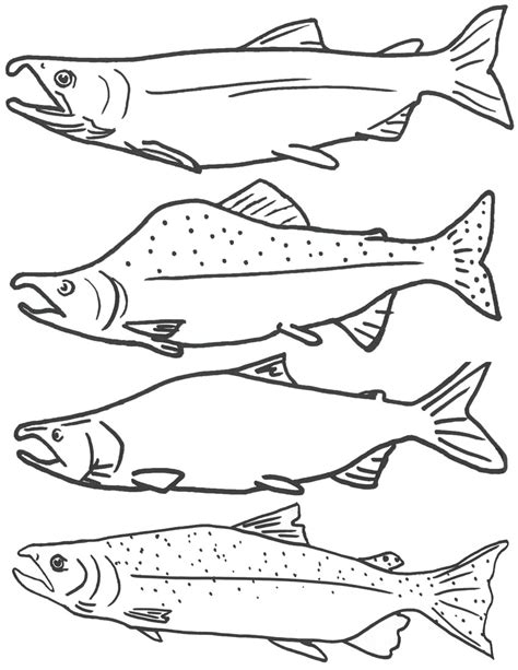 free coloring page of salmon fish free printable fish