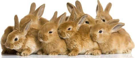 like a bunny i am not a rabbit laughing catholic