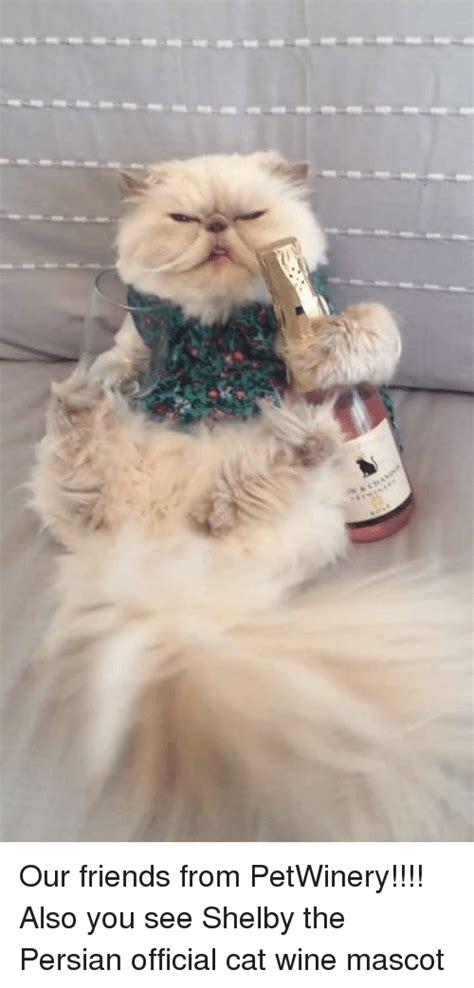 Persian Cat Meme - 25 best memes about cat wine cat wine memes