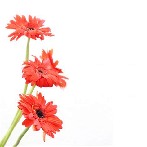 cornici compleanno fiori su sfondo bianco per anniversario compleanno
