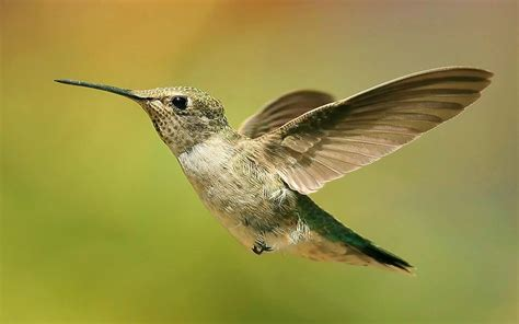 nature birds hummingbirds depth field colibri widescreen