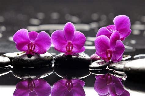 gambar bunga warna purpleunguviolet gambar top