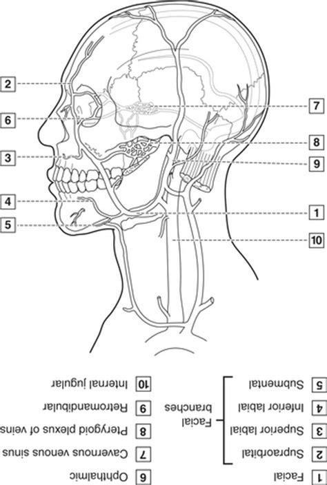dental anatomy coloring book saunders 4 neck and dental anatomy pocket dentistry