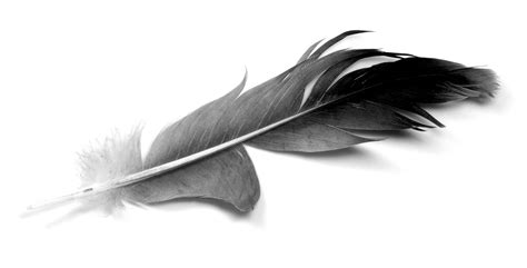 The Meaning And Symbolism Of The Word Feather Black Feather Meaning