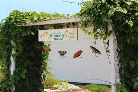 panhandle butterfly house love to live in pensacola florida family fun panhandle