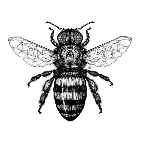 White Black Sketch black and white bee drawing www imgkid the image