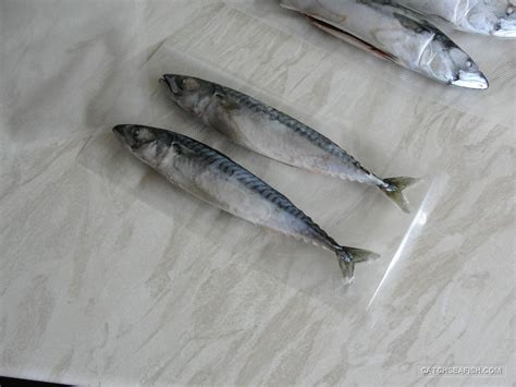 Vaccum Fish vacuum packing your fish sea fishing tackle and lure fishing