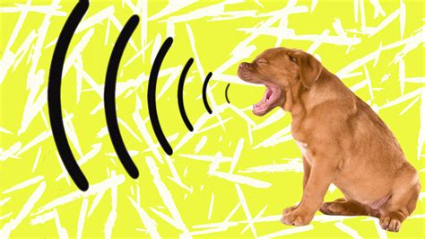 when do puppies start barking if your s bark suddenly changes it could be the sign of a health problem