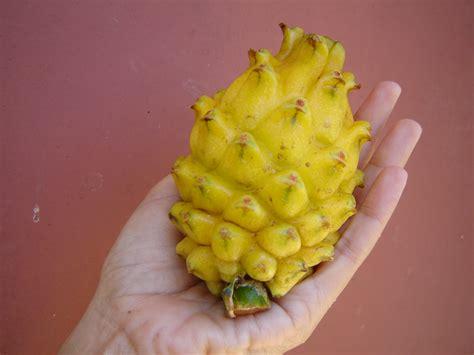 fruit yellow yellow fruit liguified s
