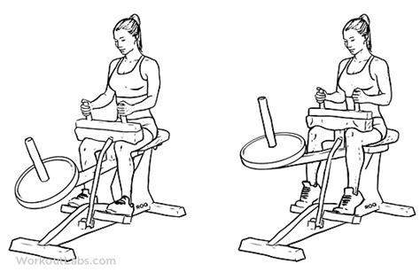 seat calf raise seated calf raise illustrated exercise guide workoutlabs