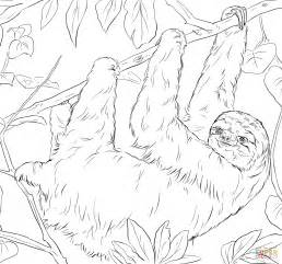 Sloth Coloring Pages sloth coloring page free printable coloring pages
