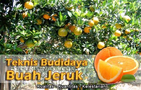 Paket Budidaya Melon pedoman teknik budidaya tanaman buah jeruk