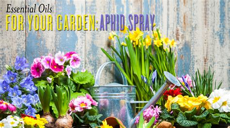 Garden Of Oils by Essential Oils For Your Garden Aphids Spray