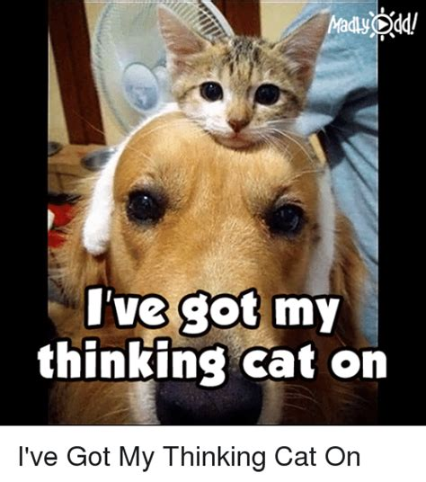 Thinking Cat Meme - thinking cat meme 100 images 10 funny cat memes 2015