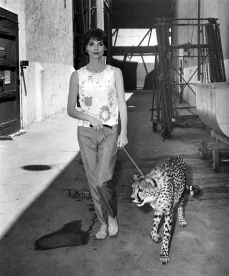 elsa martinelli hatari picture of elsa martinelli