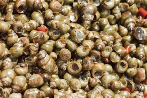 come si cucinano le lumache di mare come cucinare le lumache mauro uliassi risponde agrodolce