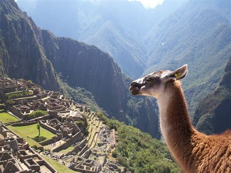 lua the llama and the mountain of books file machu picchu 25 jpg wikimedia commons