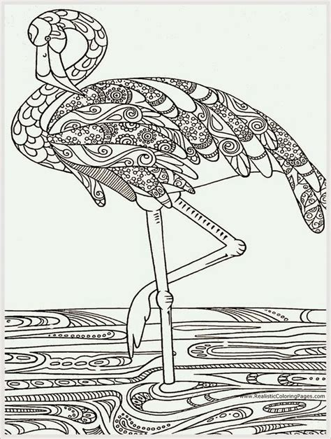 heron bird adult coloring pages  realistic coloring