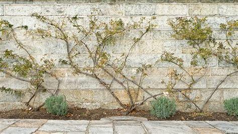 Attache Plante Grimpante by Fabriquer Support Plante Grimpante Great Les Anciens