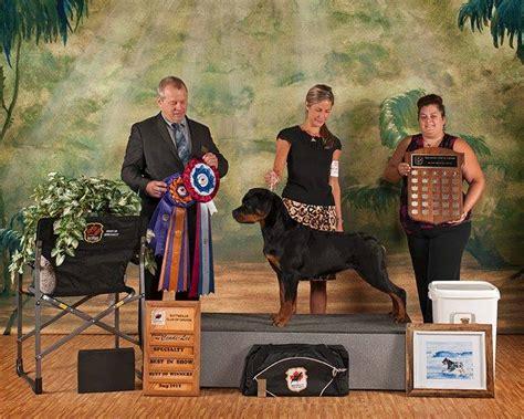 rottweiler specialty shows rcc maritime regional specialty show 2014 rottweiler club of canadarottweiler club