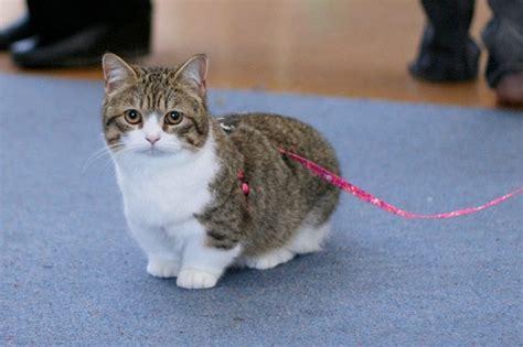 14 Weird but Cool Cat Breeds