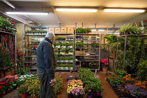 mercato dei fiori e delle piante ornamentali mercati di roma