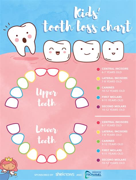 children s teeth diagram be ready for the tooth with this handy chart for
