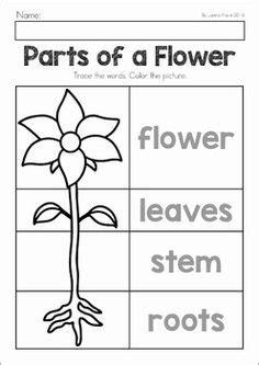 printable preschool flowers shape tracing and coloring worksheet flower free
