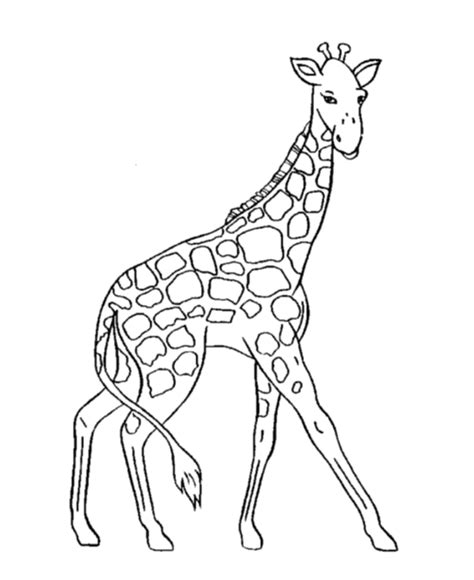 coloring pages of cartoon giraffes giraffe coloring pages for kids coloring home