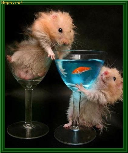 Table Cards Cocktail Animals Funny Pictures Funiacs Com