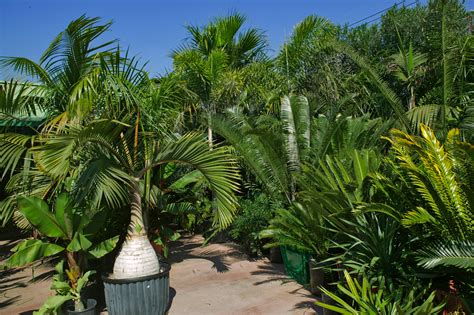 outside plants tour of jungle music palms cycads tropical plants