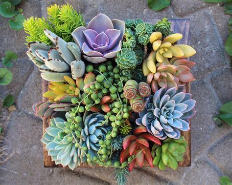 Cactus Planter by Succulent Wonderland Vertical Succulent Garden Noveltystreet