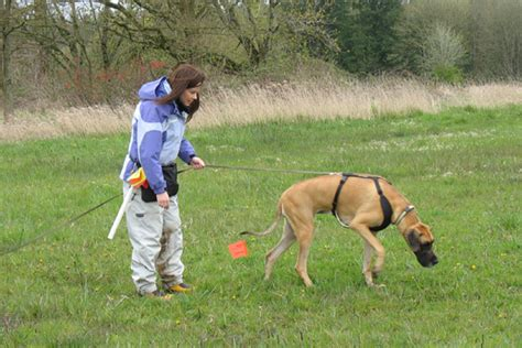 how to tracking dogs dogs in tracking and mixed breeds my tracking