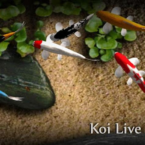 koi live wallpaper full version apk download appfanclub