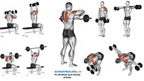 best shoulder workout 5 exercises explained