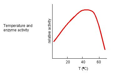 design experiment enzyme activity c7 inhibition by temperature and ph changes biology