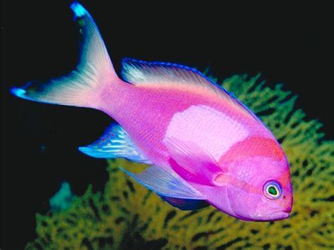 fish for life a tropical fish wild life animal