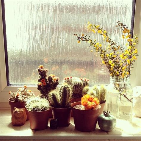 Best Windowsill Flowers 14 Best Cactus De Diferentes Tipos Images On
