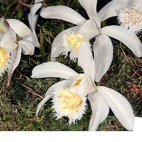 orchideen im garten orchideen im garten