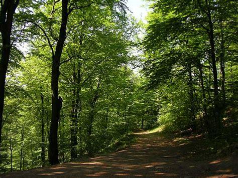imagenes de paisajes naturales bosques paisajes de ensue 241 o paisajes de bosques