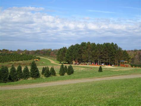 top christmas tree farms in harrisburg pa hozak tree farm 19 photos trees 470 hozak rd clinton pa