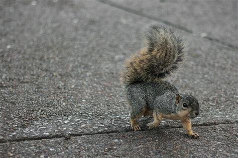 mammifero volante scoiattolo tutto su questo piccolo e simpatico mammifero