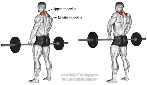 barbell shrug exercise and weight