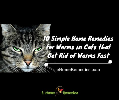 tapeworm treatment home remedy cats archives ehome remedies