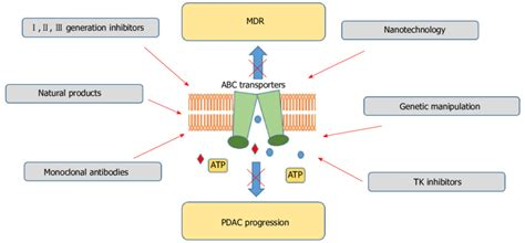 atp binding cassette pharmacological approaches towards inhibition of atp